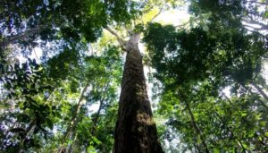 ➤ árbol de la vida colgante plata Analiza precio para comprar en LIBRERIAESOTERICA.NET