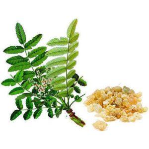 boswellia sacra ➤ Ayuda al comprar en LIBRERIAESOTERICA.NET
