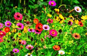 botanica oculta ➤ Ayuda para comprar con LIBRERIAESOTERICA.NET