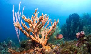 ➤ coral bambu Analiza precios al comprar con LIBRERIAESOTERICA.NET