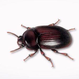 ➤ escarabajo joya Compara precio para comprar en LIBRERIAESOTERICA.NET