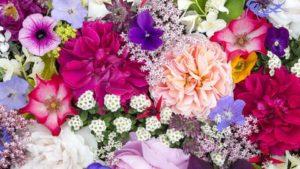 ➤ flores del alba Analiza precio para comprar en LIBRERIAESOTERICA.NET