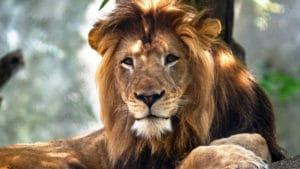 leon alado ➤ Compara precio al comprar con LIBRERIAESOTERICA.NET