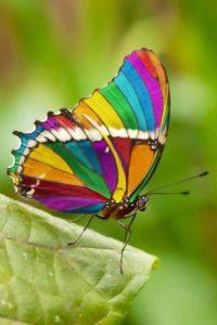 mariposas reales ➤ Compara precios para comprar en LIBRERIAESOTERICA.NET