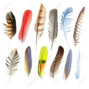 plumas de aguila ➤ Compara precio al comprar con LIBRERIAESOTERICA.NET