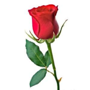 rosa chaves ➤ Consejos al comprar en LIBRERIAESOTERICA.NET