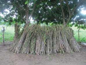 varas de madera ➤ Consejos para comprar en LIBRERIAESOTERICA.NET